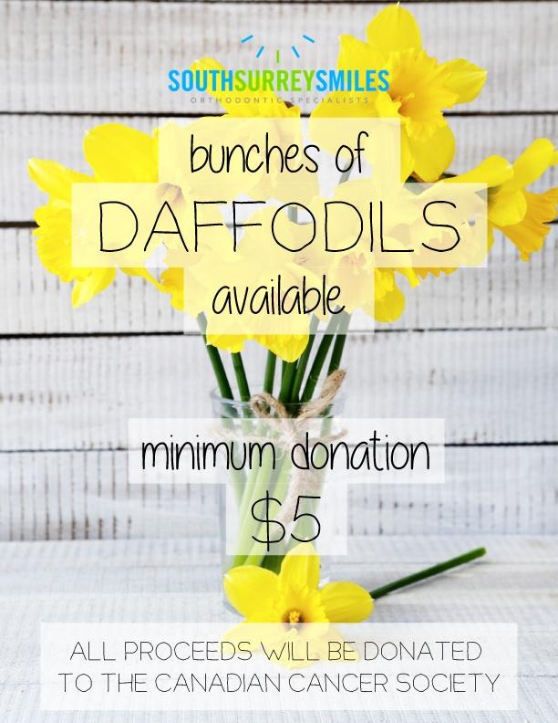 sss-daffodils-1